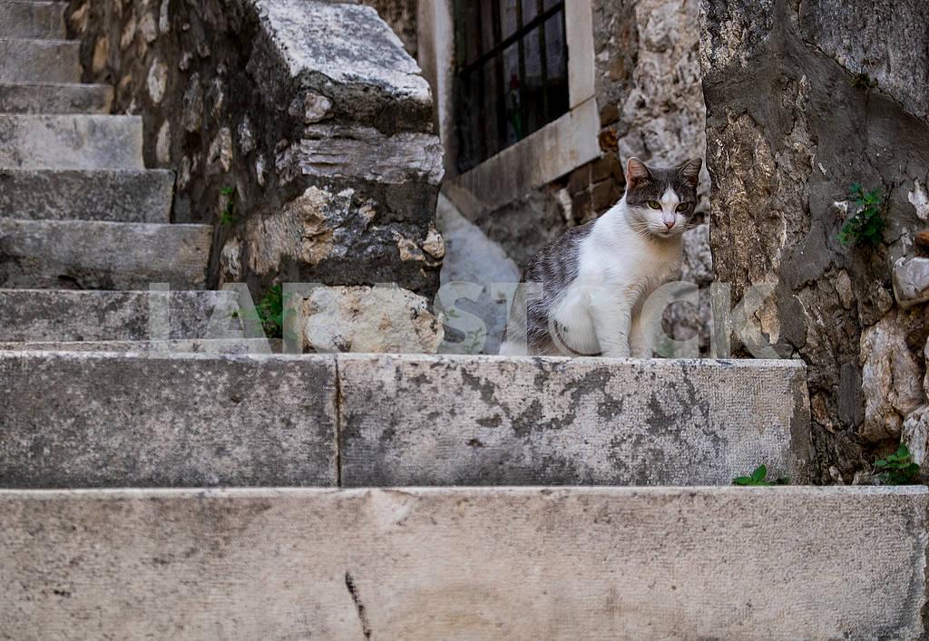 Кошка на лестнице в Шибенике — Изображение 74565