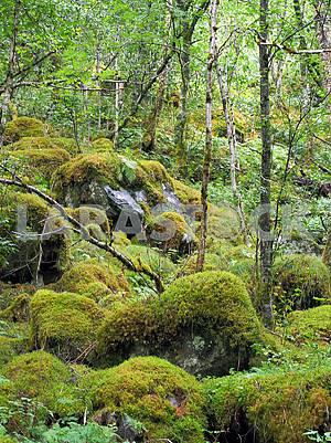 Moss on stones