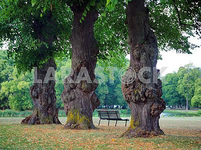 Trees in Drottningholm Park