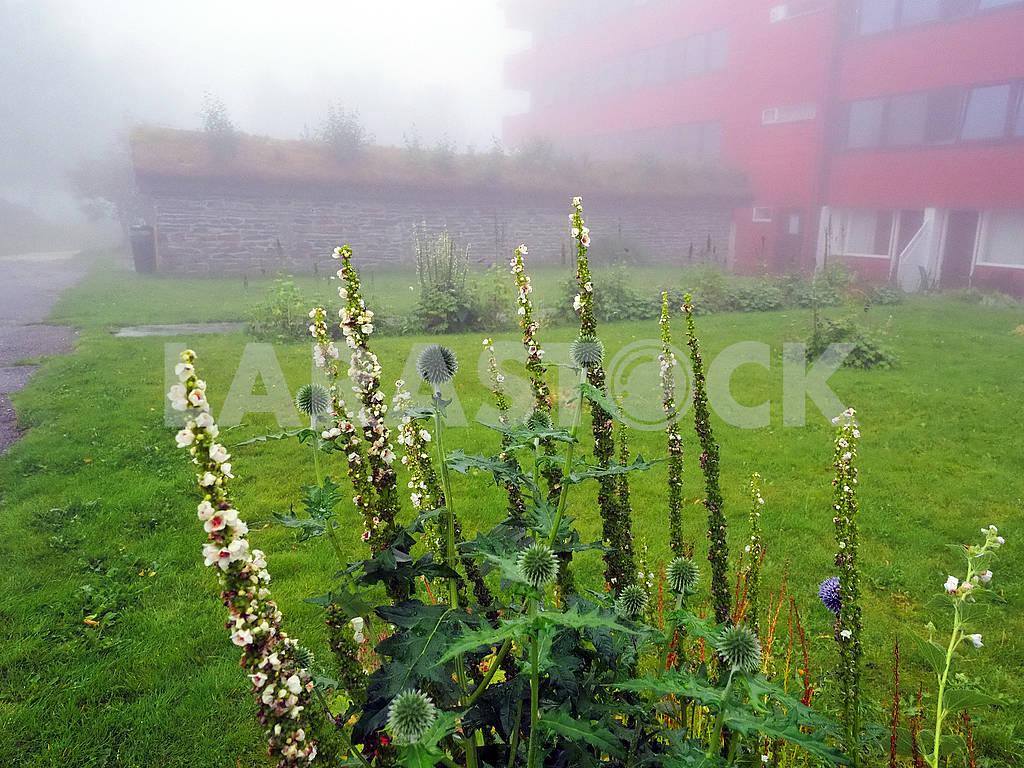 Растения и утренний туман — Изображение 75400