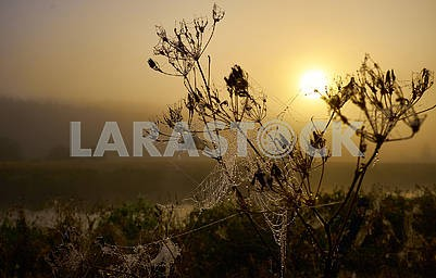 The drop of dew on a net flower during the beautiful sunrise
