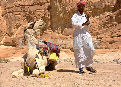 Camel and driver in the desert