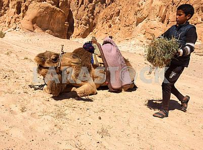 Bedouin boy carries camel feed