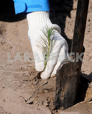 Planting tree seedlings in the forest