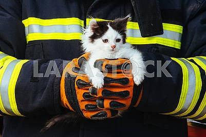 Rescuer and kitten