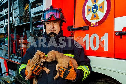 Rescuer keeps puppies