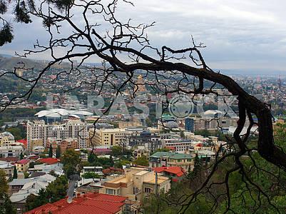 Панорама Тбилиси, старое дерево