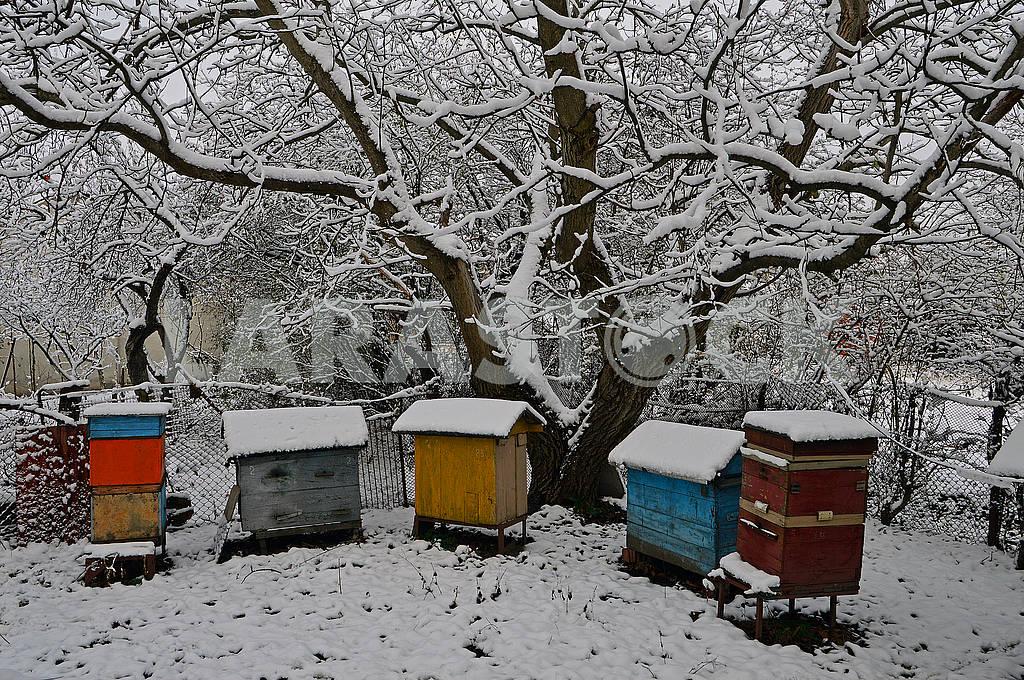 П'ять вуликів і старий горіх покриті снігом — Изображение 76700