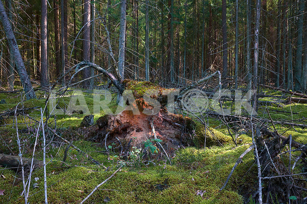 Mystic beast figure in forest with intersting lightning from the side — Image 76789