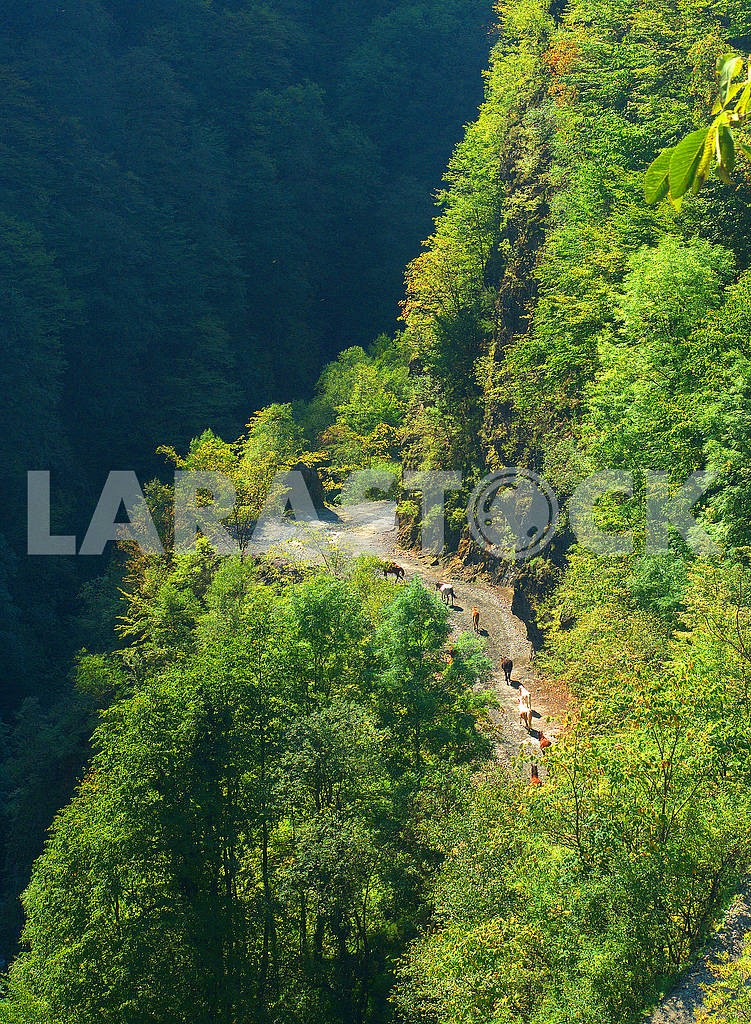 Дорога на перевал Абано, Кахетия — Изображение 77086