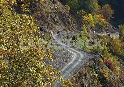 The road to the Gombori Pass