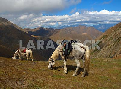 Лошади пасутся в горах