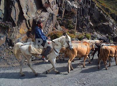 Shepherd on horse