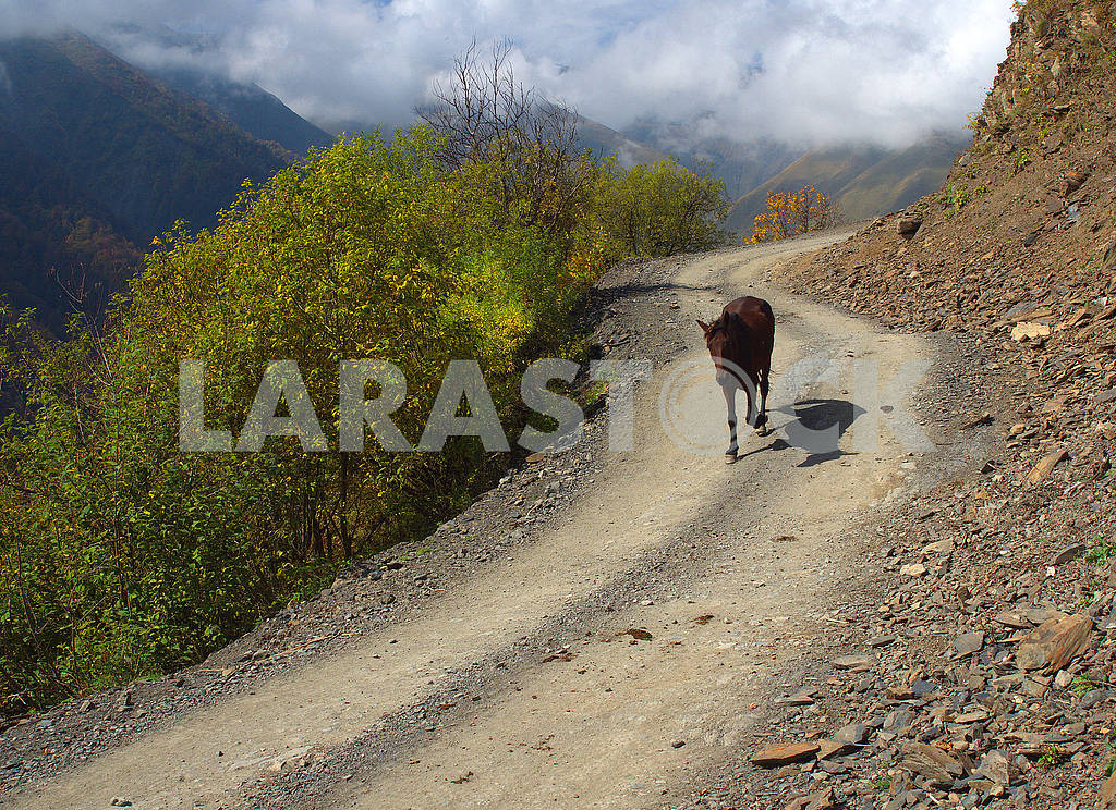 Lonely cow on the Tusheti road — Image 77142