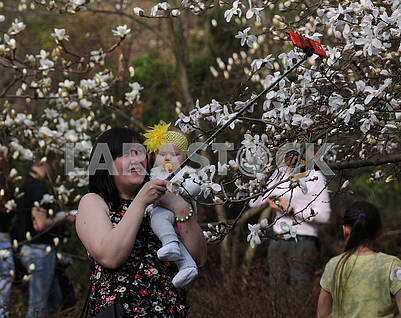 People are photographed in magnolias