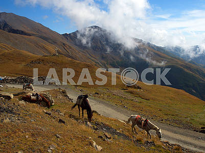 Horses on a mountain pass