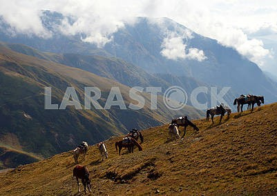 Horses graze on a mountainside