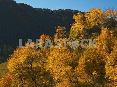 Деревья с желтой листвой в горах