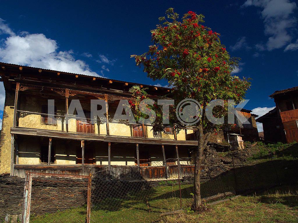 Старый дом и дерево в селе Шенако — Изображение 77598
