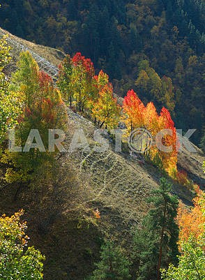 Yellow-red trees on the rock