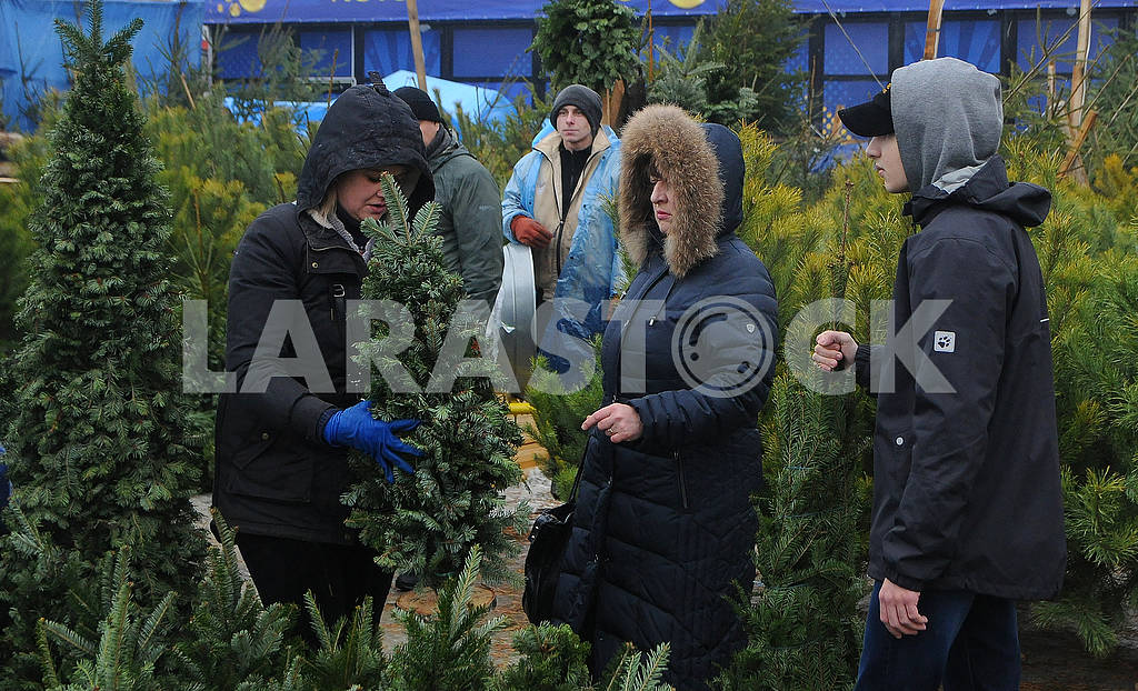 People choose the Christmas tree — Image 77677