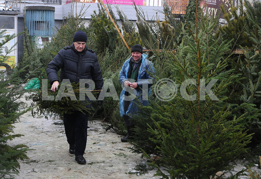 Buyer with a Christmas tree — Image 77678