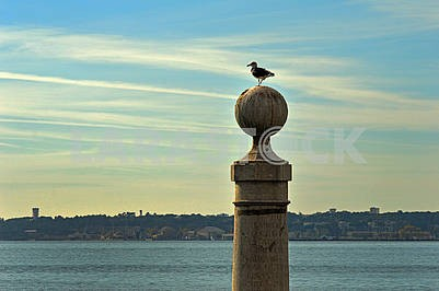 Lonely seagull on a stone ball