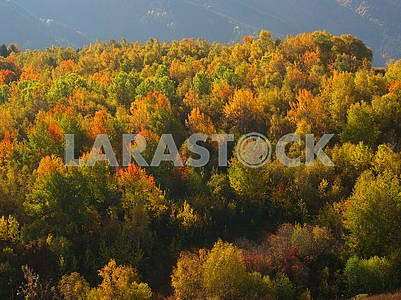 Autumn trees in the Caucasus, Georgia
