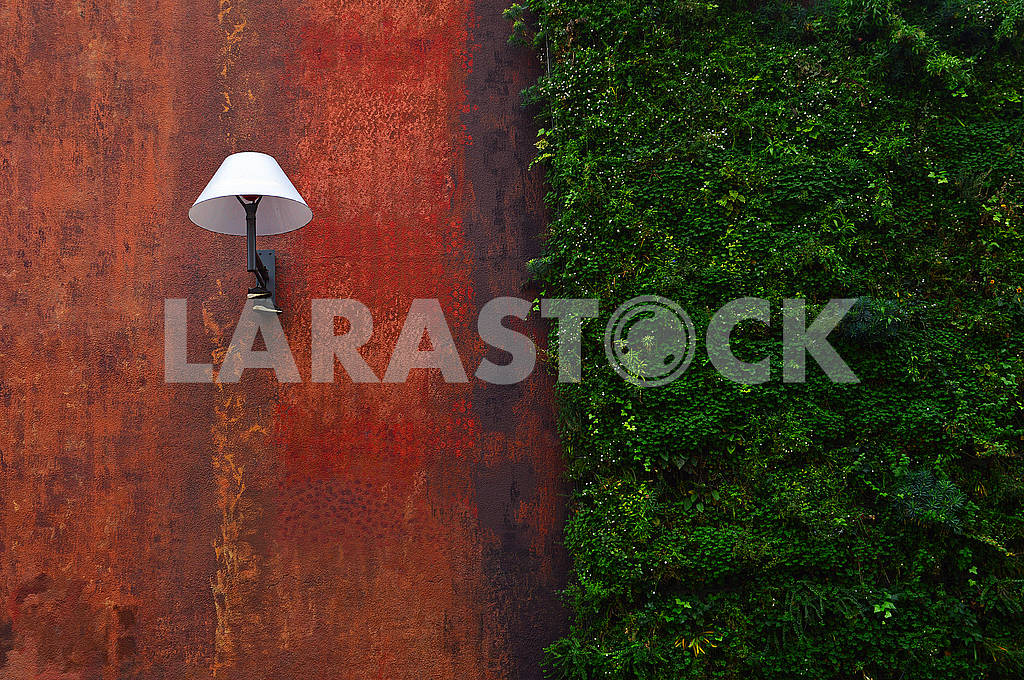 Modern street lamp and ivy on the wall — Image 78041