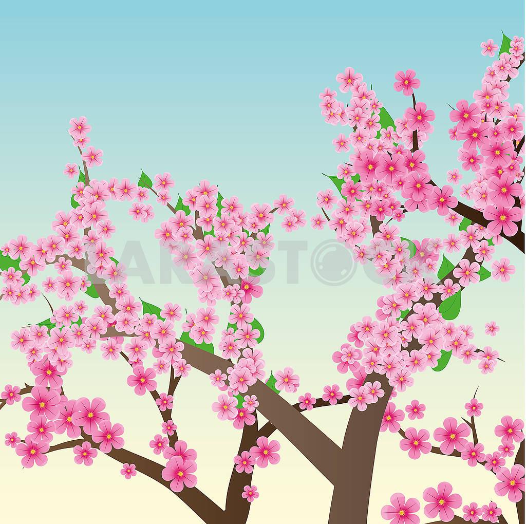 Sakura trees — Image 78825