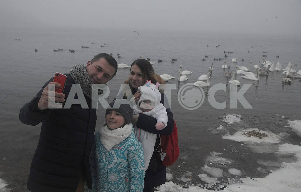 People are photographed against a background of swans. — Image 78923