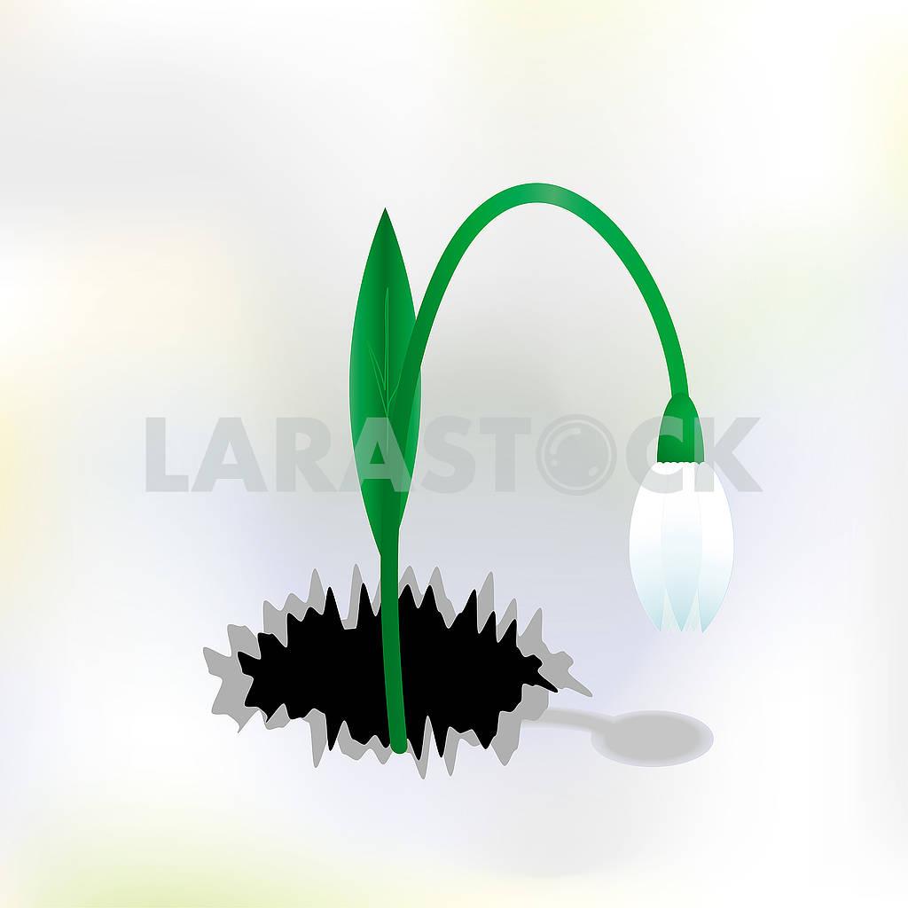 Snowdrop flower — Image 79401