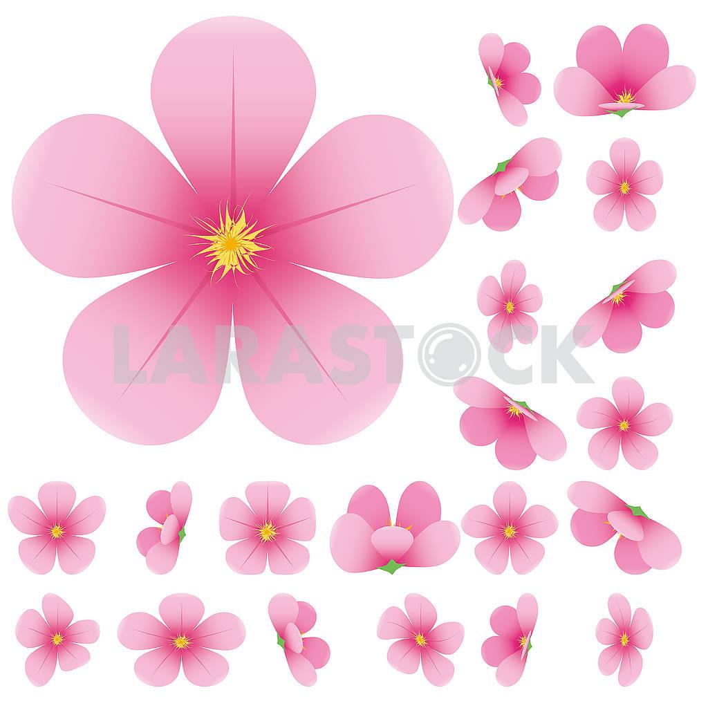 Cherry blossom — Image 79555
