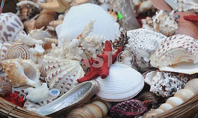 shells, stars, in a wicker basket