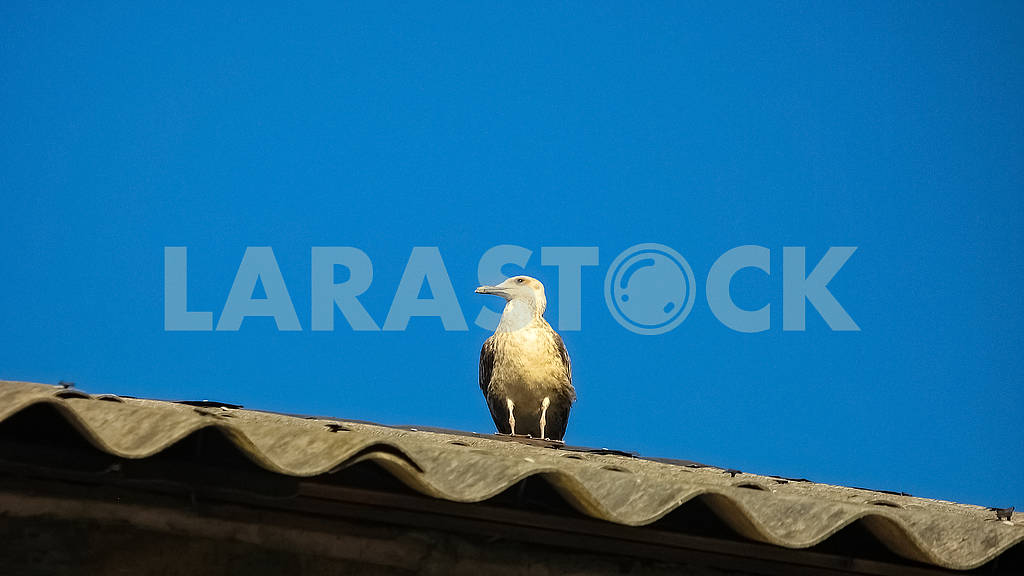 Seagull sits at the roof of the house — Image 81476