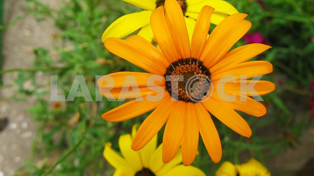 Beautiful yellow flower close-up. — Image 81542