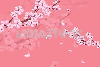 Pink background, sakura flowers on a branch, reflection on glass