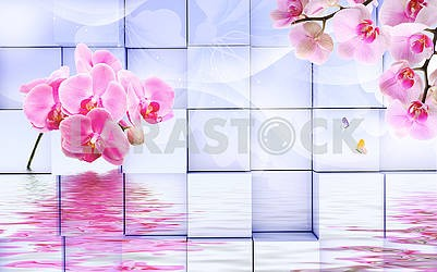 3d illustration, light background, cubes, pink orchids, reflection in water