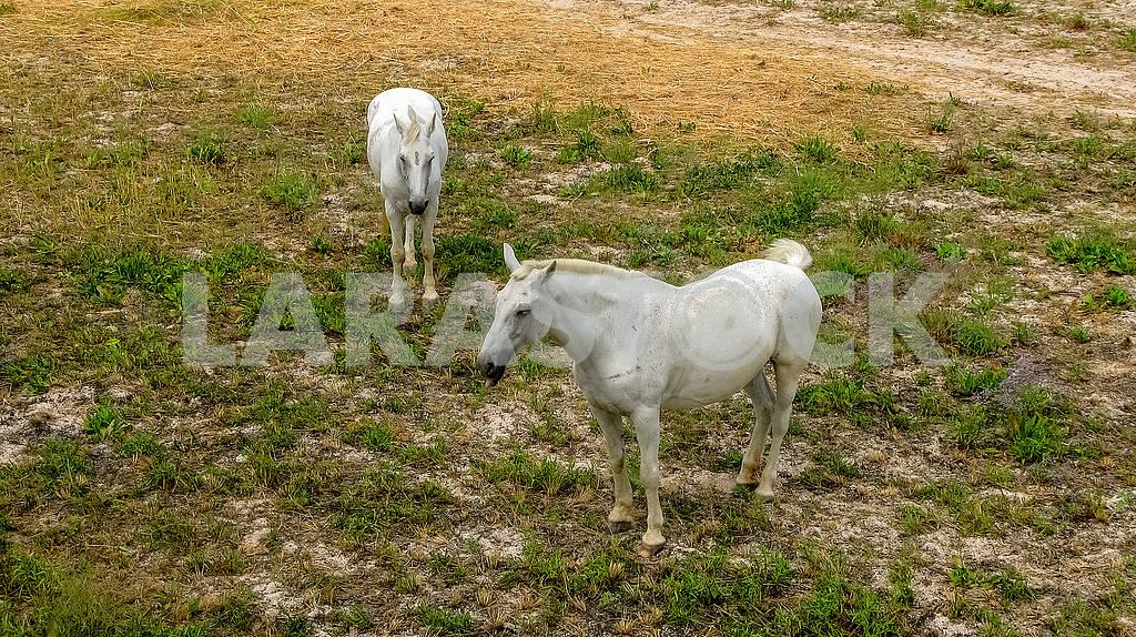 White horses — Image 82328