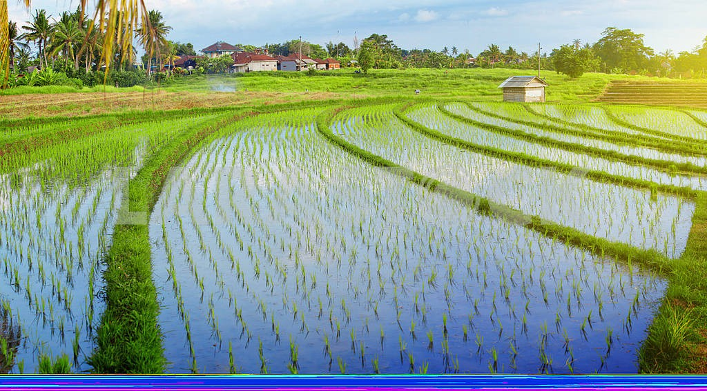 Empty traditional Bali rice field panorama with water — Image 82430