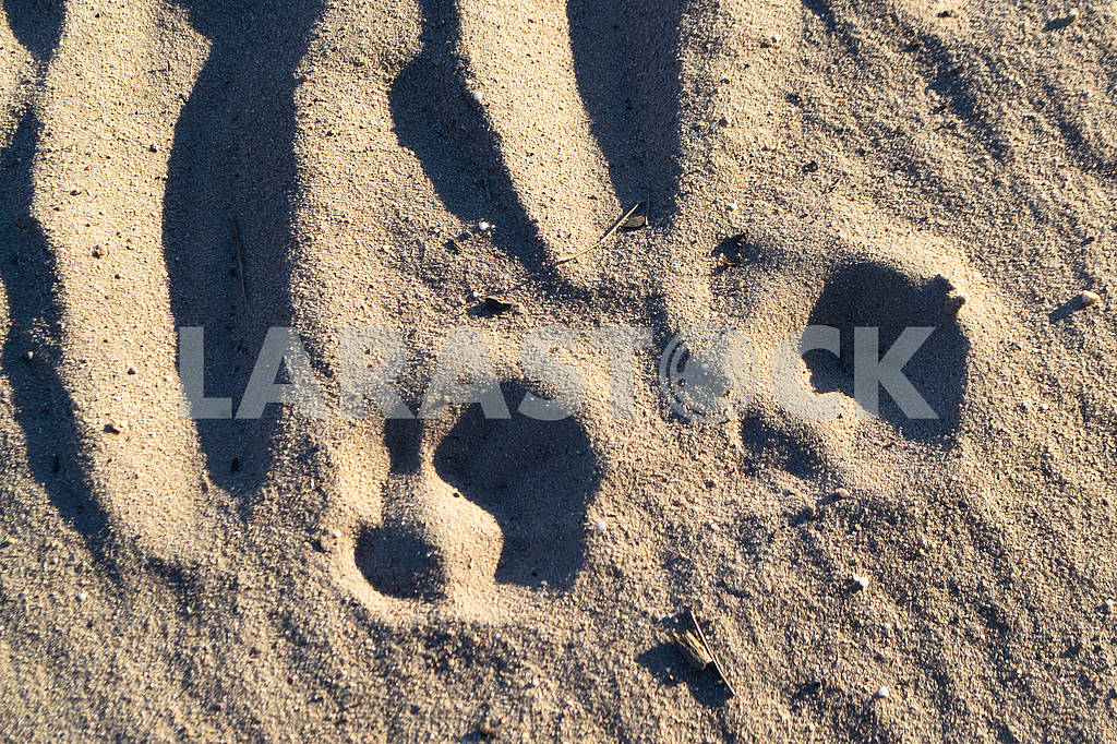 Two footprint of a wolf texture background. Wild forest — Image 83005
