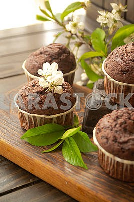 Chocolate muffin on rustic dark wooden background with flowers of cherry