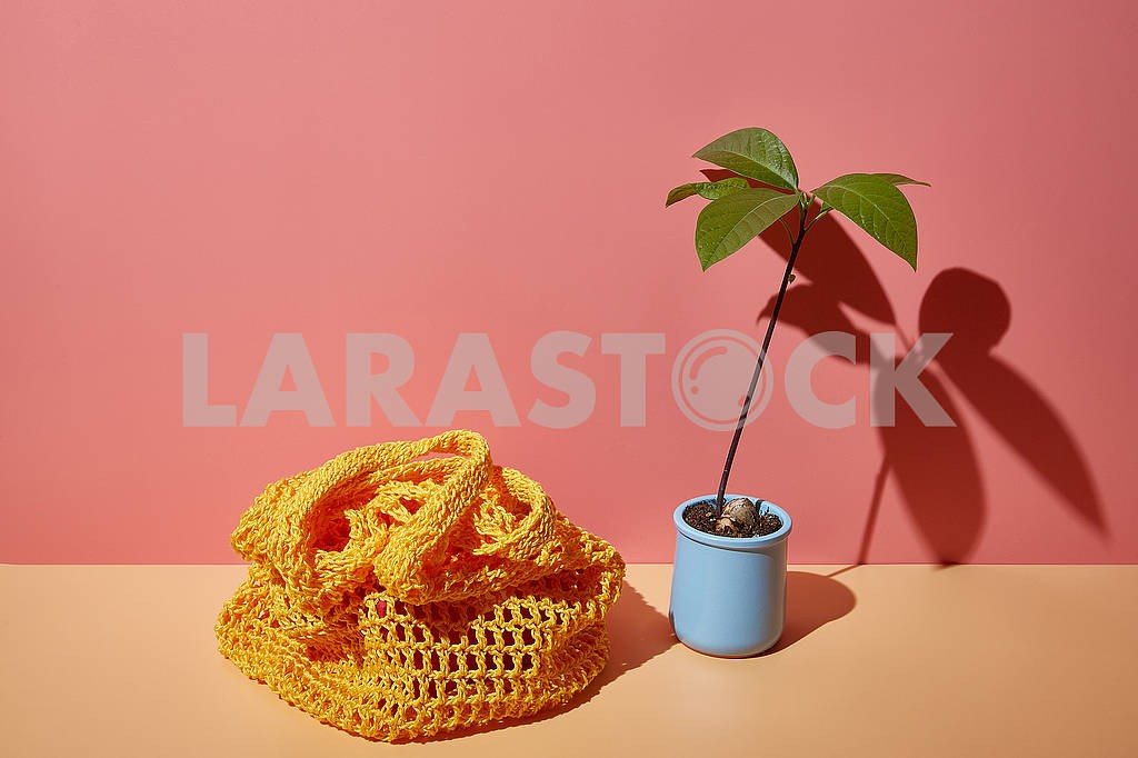Avocado sprout and string bag on a colored corner background with copy space in bright sunny shadows. — Image 83166