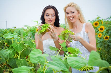 Two girlfriends having fun in field of sunflowers